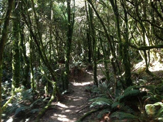 naturist 0005 Mount Tauhara, North Island, New Zealand