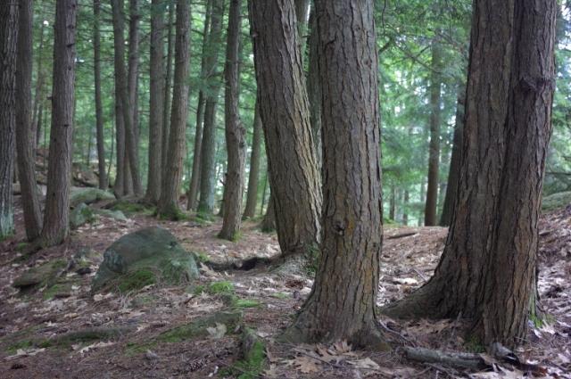 005 Hemlock Forest 0000 Georgian Bay, Ontario, Canada
