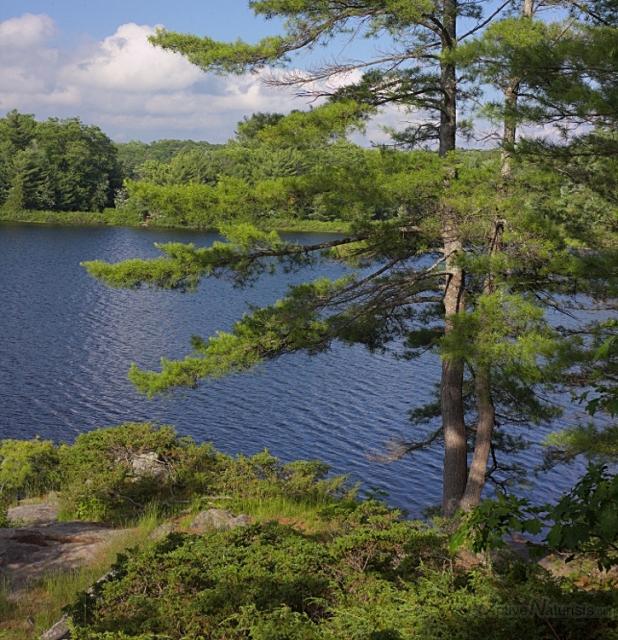 006 White Pines 0000 Georgian Bay, Ontario, Canada